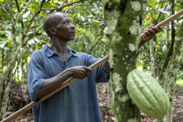 Dawn of the Living Income Differential's potential major impact on West African cocoa farming