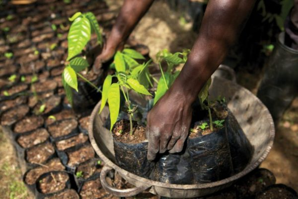 Major issues remain to ensure the cocoa sector's future sustainability