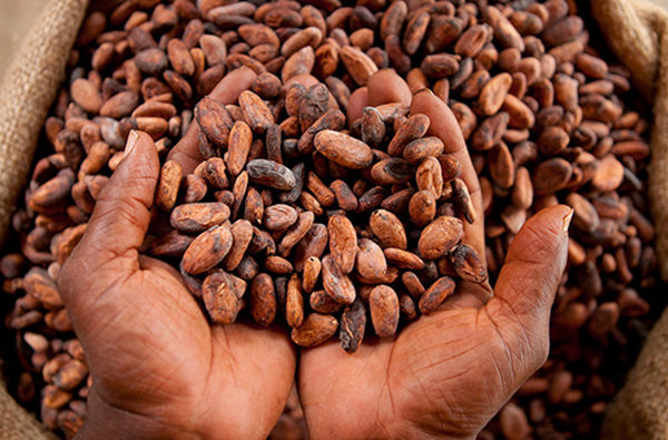 Greater progress required on key schemes to lift African cocoa farmers from below poverty line
