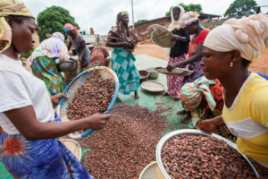 Key NORC report on child labour within cocoa supply reveals significant concerns still remain