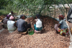Time is not on our side for delivering tangible change for cocoa sustainability in Ghana and Ivory Coast
