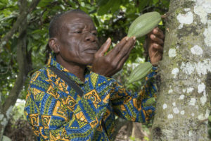 Digital payments for Ghana's cocoa growing communities could prove vital to the sector