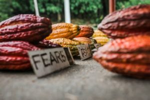 Cocoa sector sustainability in West Africa remains under considerable threat